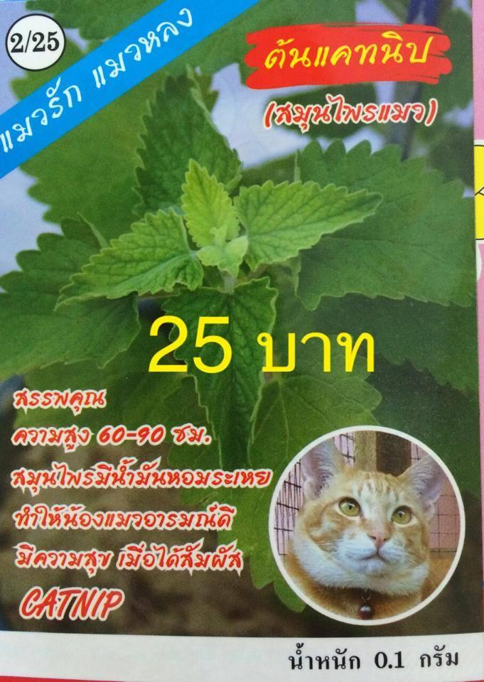 เมล็ดพันธุ์แคทนิป(สมุนไพรแมว) ประมาณ 150เมล็ด